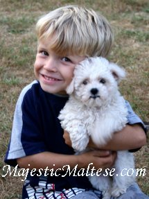 North Carolina, Elizabeth City, Hampton Roads, Williamston, Maltese, Maltepoo, Shihpoo and Maltipoo puppy dogs for sale